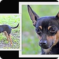 Adopt A Pet :: Bo - Brooksville, FL