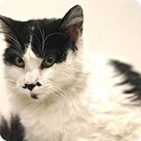 Adopt A Pet :: Randy - Sacramento, CA