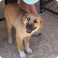 Adopt A Pet :: Mollie - Conway, AR
