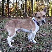 Adopt A Pet :: Elliott - Mocksville, NC