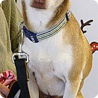 Adopt A Pet :: Charlotte mellow loving gal - Sacramento, CA