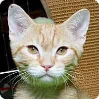 Adopt A Pet :: Ivan M - Sacramento, CA