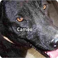Adopt A Pet :: Cameo,FL - Miami Beach, FL