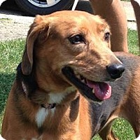 Adopt A Pet :: Nugget - North Olmsted, OH