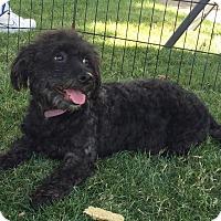 Adopt A Pet :: Papas - La Quinta, CA
