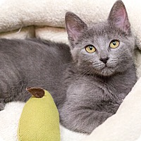 Adopt A Pet :: Jambalaya - Chicago, IL