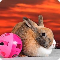 Adopt A Pet :: JuJu - Marietta, GA