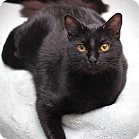 Adopt A Pet :: Cole - San Antonio, TX