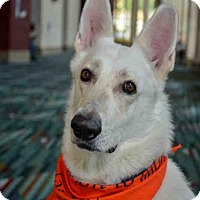 Adopt A Pet :: ZEUS - West Palm Beach, FL