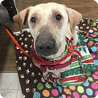 Adopt A Pet :: Chance - Muskegon, MI