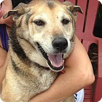 Adopt A Pet :: MISHA - Miami, FL