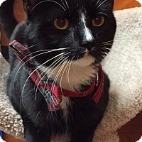 Adopt A Pet :: Jinx - Long Beach, NY