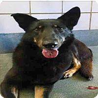 Adopt A Pet :: Patricia - San Antonio, TX