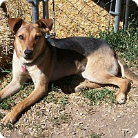 Adopt A Pet :: Cleo - Questa, NM