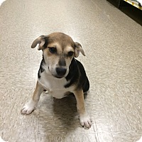 Adopt A Pet :: Tori - Hohenwald, TN