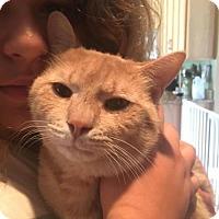 Adopt A Pet :: Chris - Palatine/Kildeer/Buffalo Grove, IL