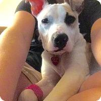 Adopt A Pet :: Aelin - Grand Rapids, MI