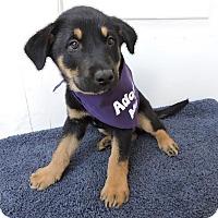 Adopt A Pet :: Cullen-Adopted! - Detroit, MI