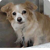 Adopt A Pet :: Angela - Austin, TX