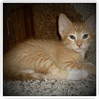 Adopt A Pet :: MOJO - Medford, WI