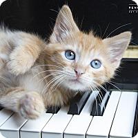 Adopt A Pet :: Belfast - Nashville, TN