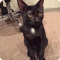 Adopt A Pet :: Parker - Frankfort, IL
