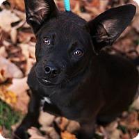 Adopt A Pet :: Stark - Cool Ridge, WV