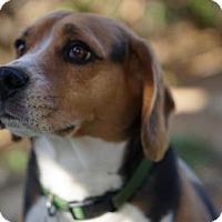 Adopt A Pet :: Willie - Chino Hills - Chino Hills, CA