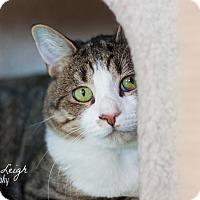 Adopt A Pet :: Hartford - Brimfield, MA
