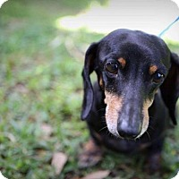 Adopt A Pet :: Raven - Weston, FL