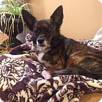 Adopt A Pet :: Princess - Homewood, AL