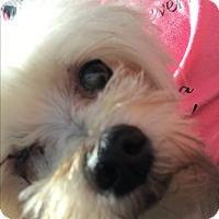 Adopt A Pet :: Cole - Lehigh, FL