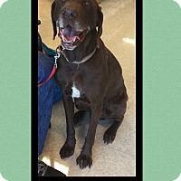 Adopt A Pet :: Buddy - Scottsdale, AZ