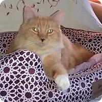 Adopt A Pet :: Buddy - Horsham, PA