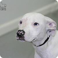 Adopt A Pet :: Lizzy - Troy, IL
