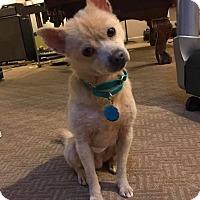 Adopt A Pet :: Bones Jones - Sharon Center, OH