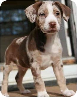 French bulldog puppies sale va