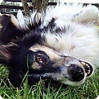 Adopt A Pet :: Kelli - Sarasota, FL