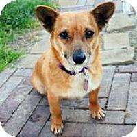 Adopt A Pet :: Piper - Austin, TX