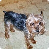 Adopt A Pet :: Kofi - Nelliston, NY