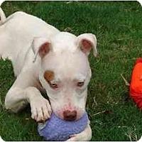 Adopt A Pet :: Marlee Matlin - Conyers, GA
