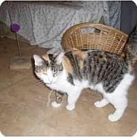 Adopt A Pet :: Helen - Hamburg, NY