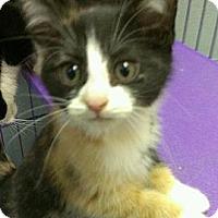 Adopt A Pet :: Khloe Kardashian - Richboro, PA