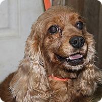 Adopt A Pet :: Vanity - Menomonee Falls, WI