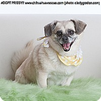 Adopt A Pet :: Prissy - Dallas, TX