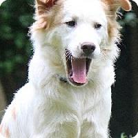 Adopt A Pet :: Noah - Oliver Springs, TN