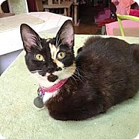 Adopt A Pet :: Kim - New York, NY