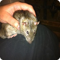 Adopt A Pet :: VLAD and MITCH - Philadelphia, PA