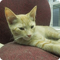 Adopt A Pet :: Macchiato - Medina, OH