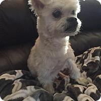 Adopt A Pet :: VOO DOO - Rancho Cucamonga, CA